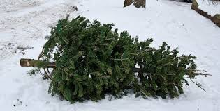 we fell into the american consumer focused tradition of putting up a tree well before christmas and growing up my mother was ready to take it down - When To Take Christmas Tree Down