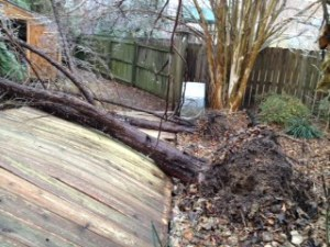 Fallen Cypress